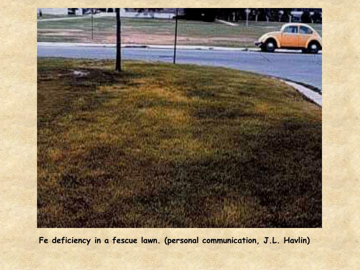 Fe deficiency in a fescue lawn. (personal communication, J.L. Havlin)