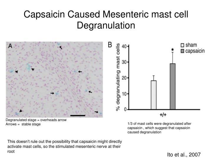 Capsaicin Caused Mesenteric mast cell Degranulation