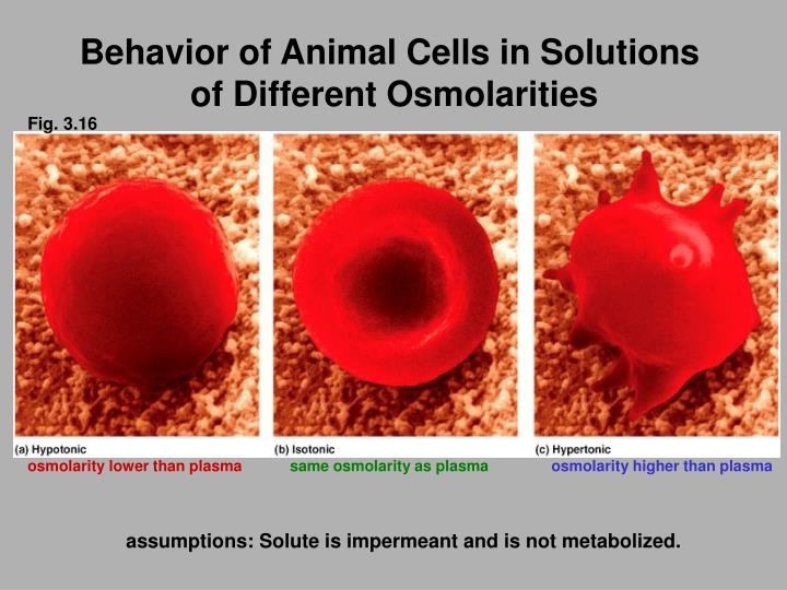 Behavior of Animal Cells in Solutions