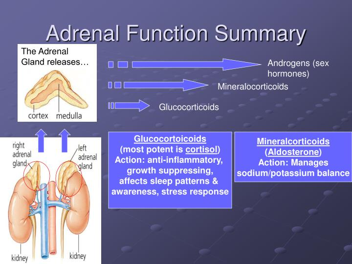 Adrenal Function Summary