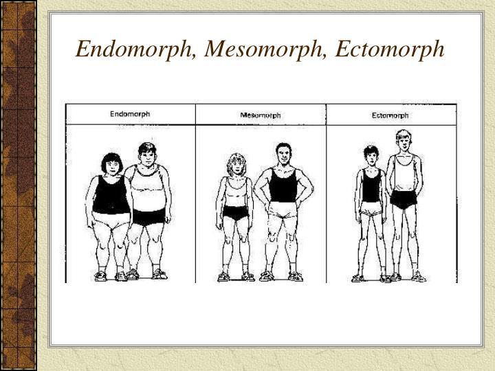 Endomorph, Mesomorph, Ectomorph