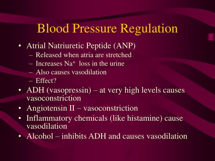 Blood Pressure Regulation