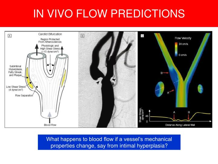 IN VIVO FLOW PREDICTIONS