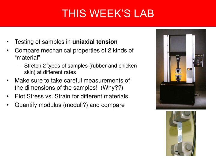 THIS WEEK'S LAB