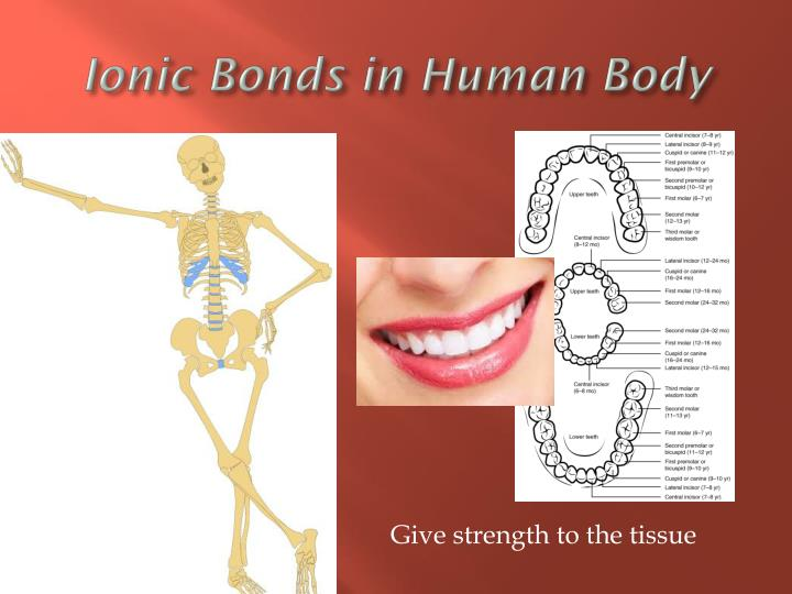 Ionic Bonds in Human Body