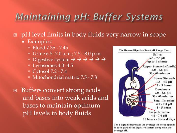 Maintaining pH: Buffer Systems