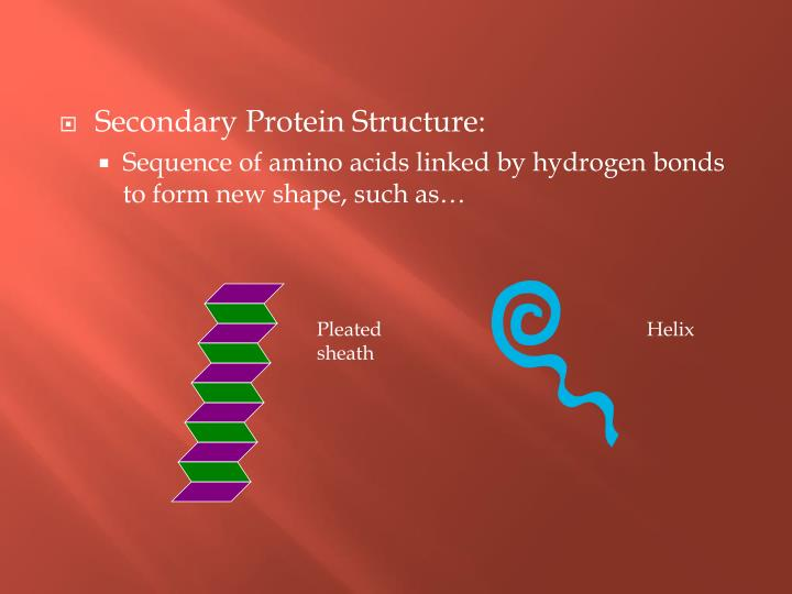 Secondary Protein Structure: