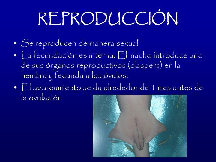 REPRODUCCIN