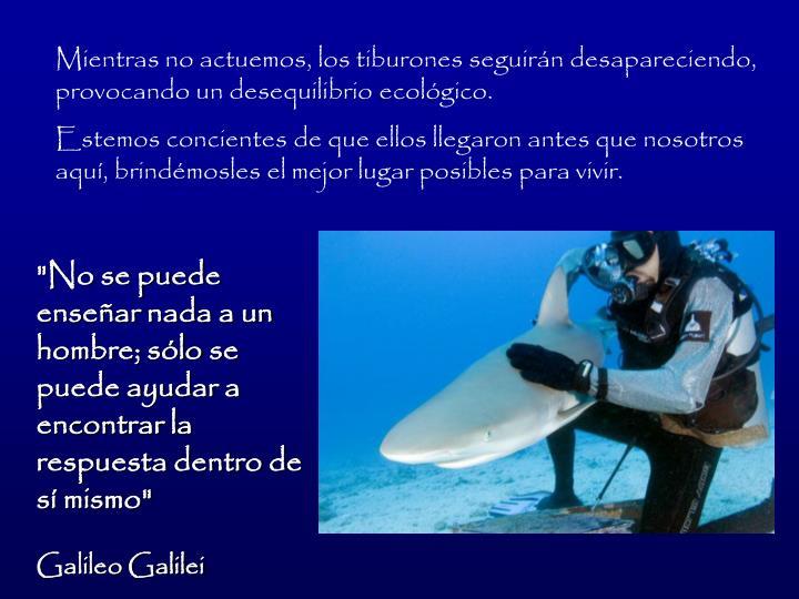Mientras no actuemos, los tiburones seguirn desapareciendo, provocando un desequilibrio ecolgico.