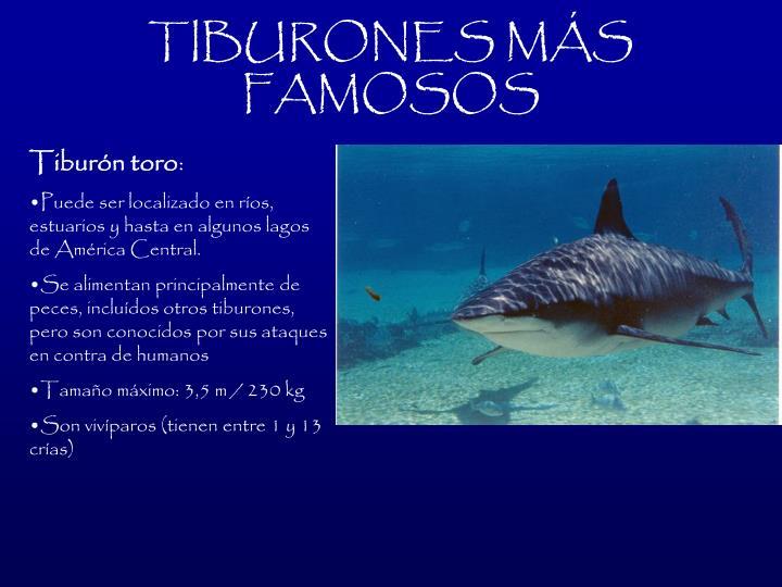 TIBURONES MS FAMOSOS