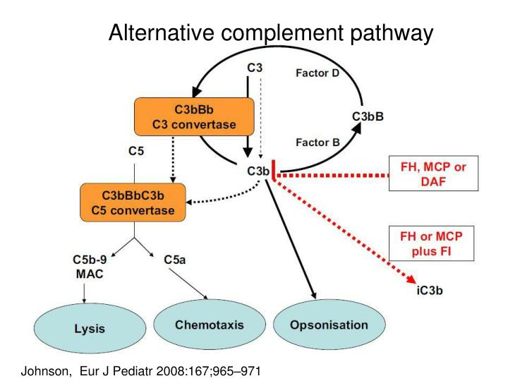 Alternative complement pathway