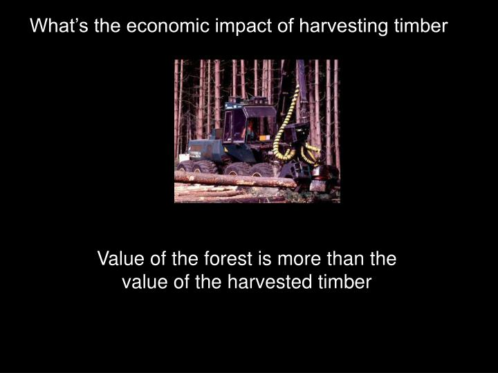 What's the economic impact of harvesting timber
