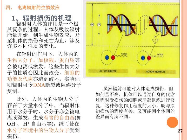 四、 电离辐射的生物效应