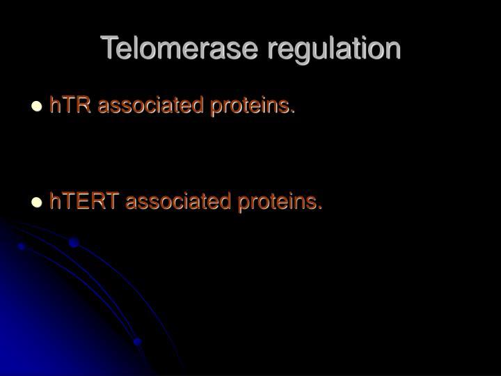 Telomerase regulation