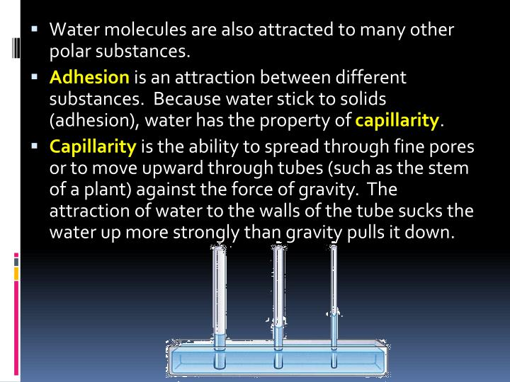 Water molecules are also attracted to many other polar substances.