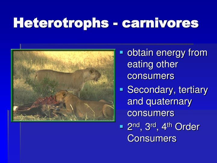 Heterotrophs - carnivores