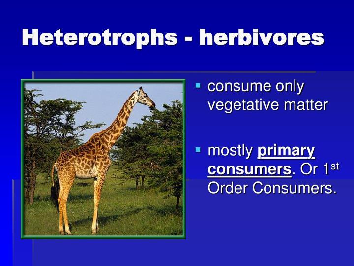 Heterotrophs - herbivores