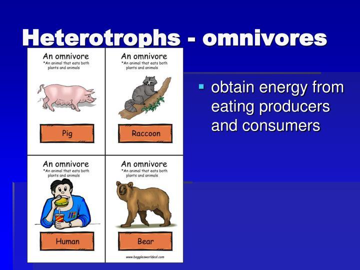 Heterotrophs