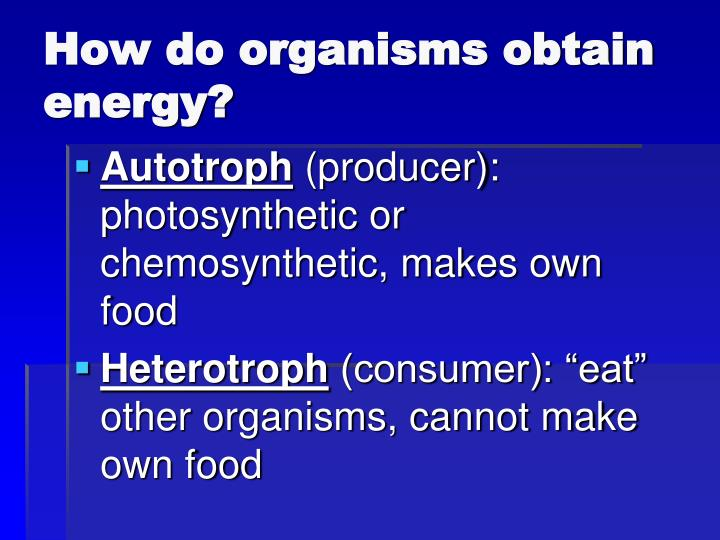 How do organisms obtain energy?