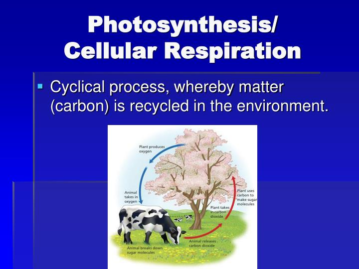 Photosynthesis/