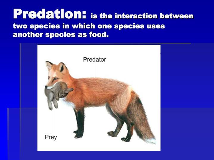 Predation: