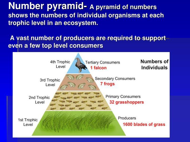 Number pyramid-