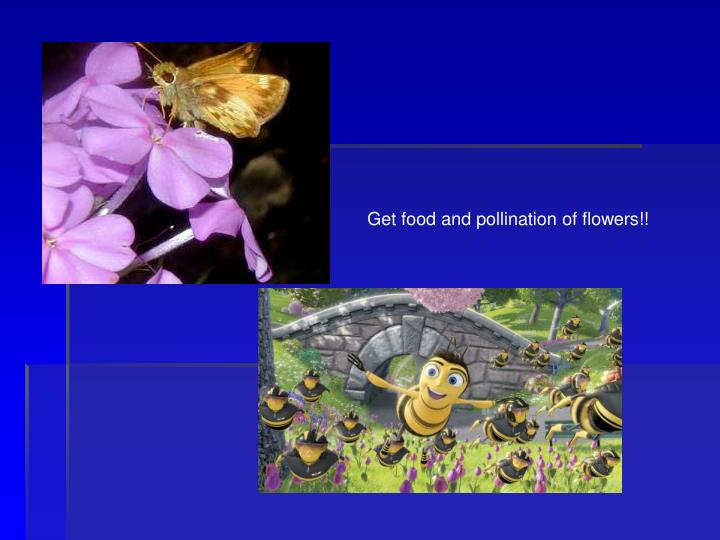 Get food and pollination of flowers!!