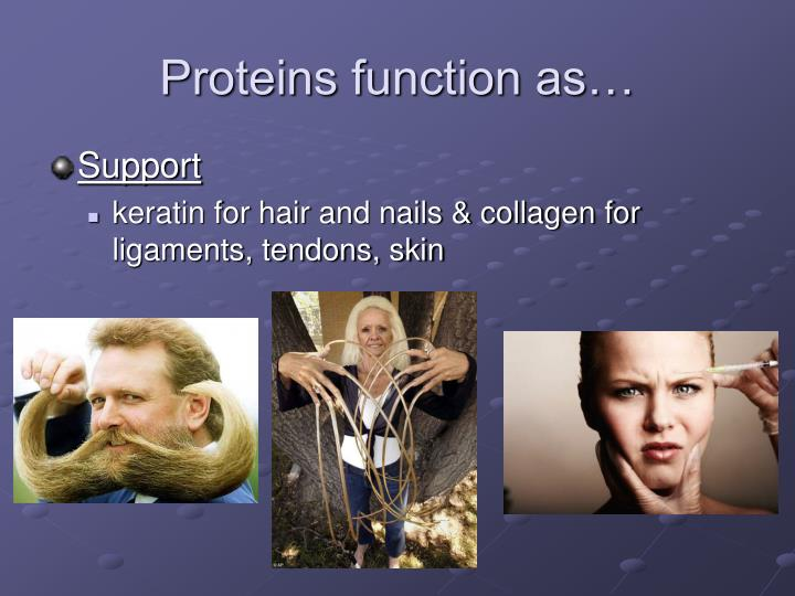 Proteins function as…