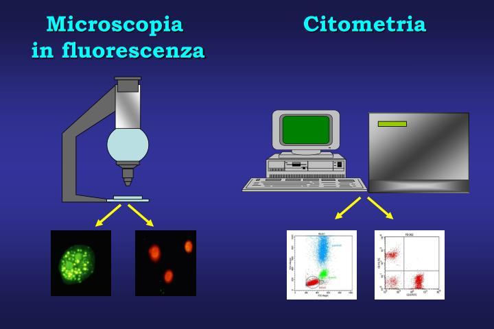 Microscopia                Citometria