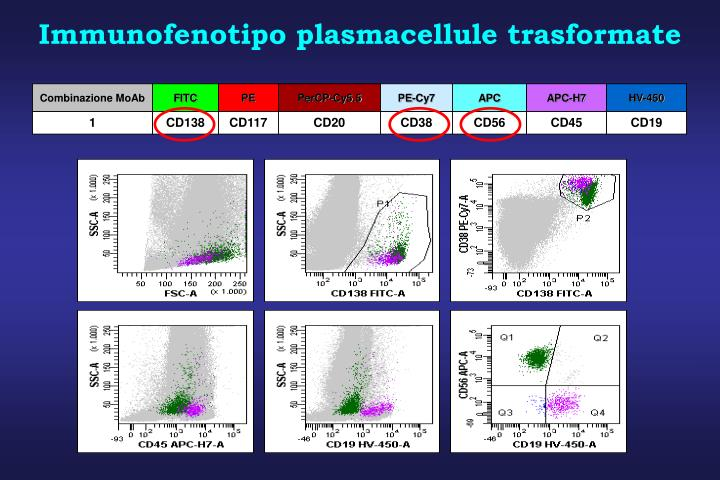 Immunofenotipo plasmacellule trasformate