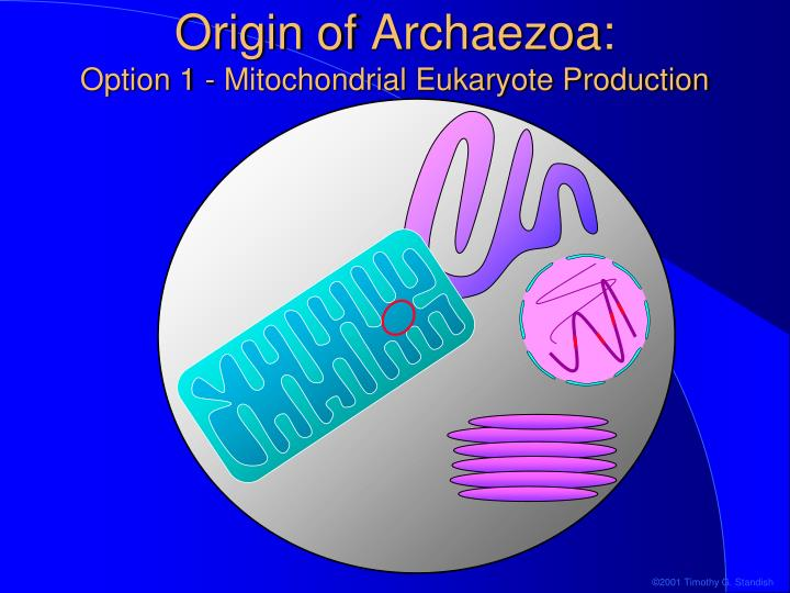 Origin of