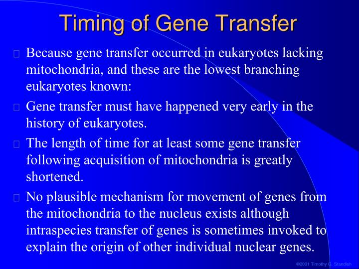 Timing of Gene Transfer