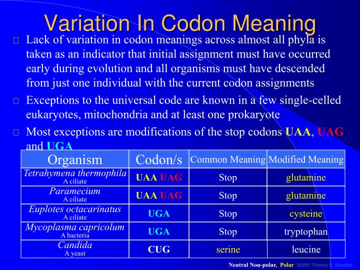 Variation In Codon Meaning
