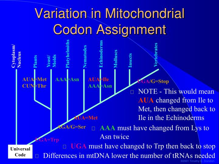 Variation in Mitochondrial Codon Assignment