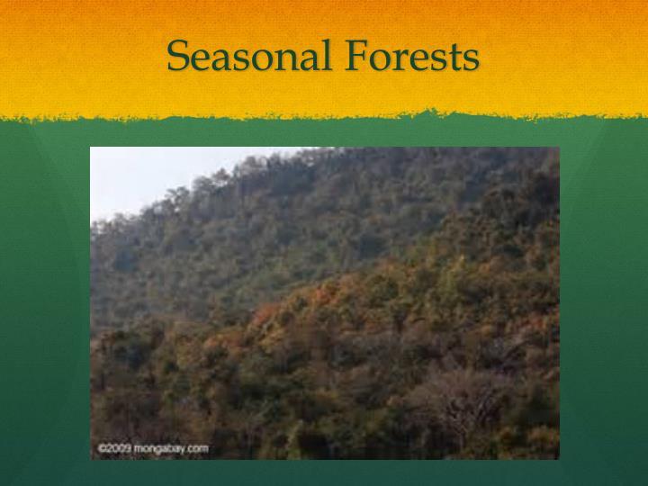 Seasonal Forests