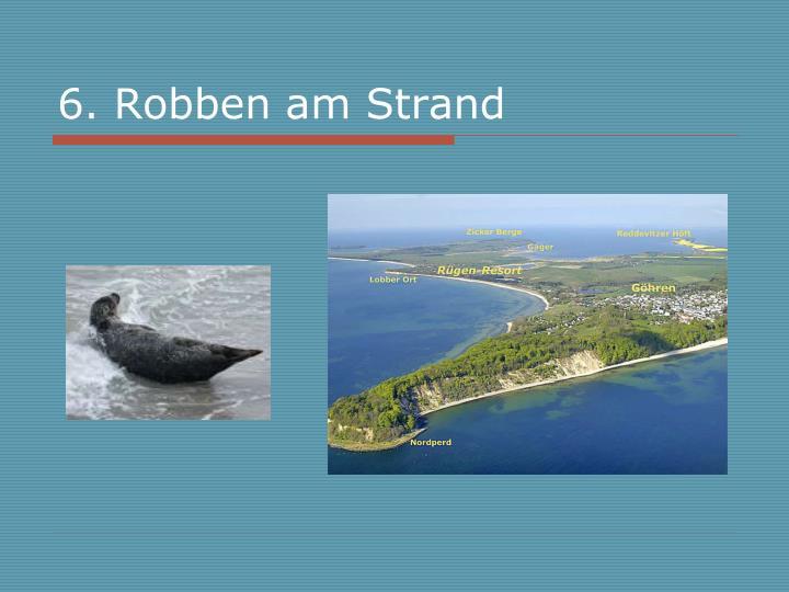 6. Robben am Strand