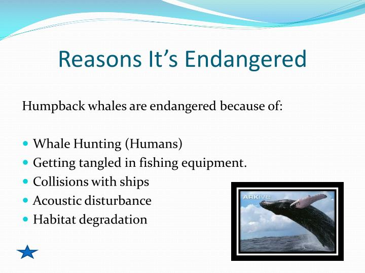 Reasons It's Endangered