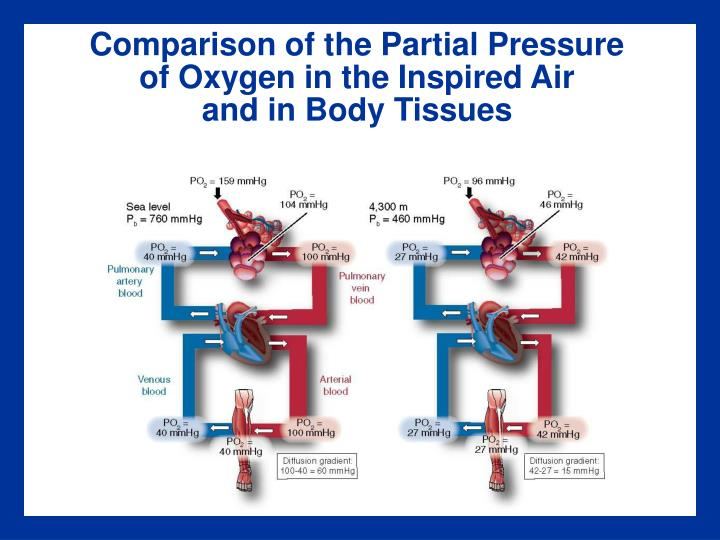 Comparison of the Partial Pressure