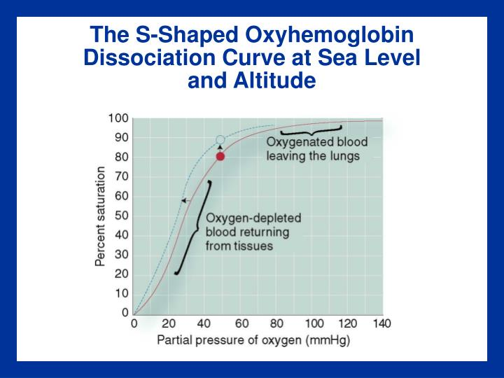 The S-Shaped Oxyhemoglobin Dissociation Curve at Sea Level