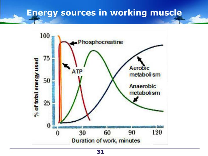 Energy sources in working muscle