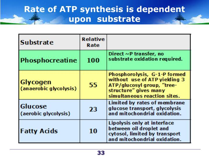 Rate of ATP synthesis is dependent upon  substrate