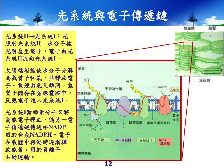 光系統與電子傳遞鏈