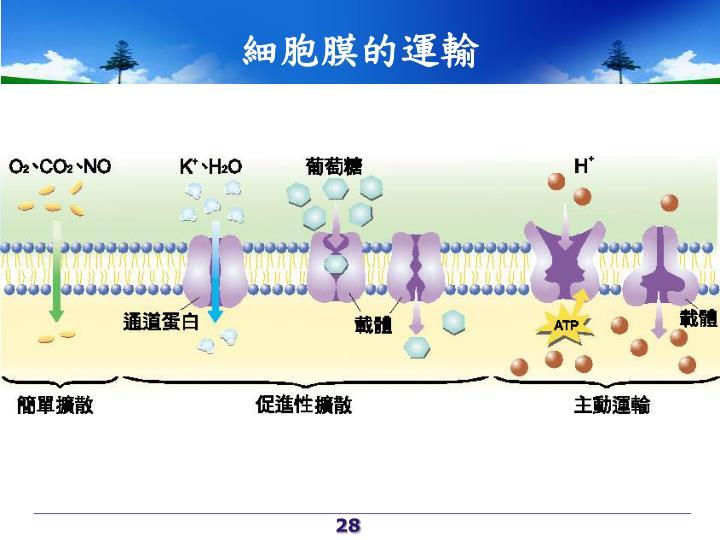 細胞膜的運輸