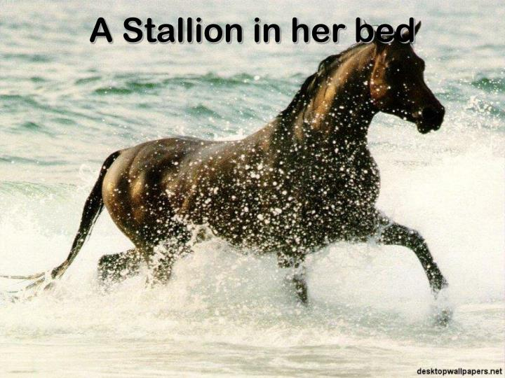 A Stallion in her bed