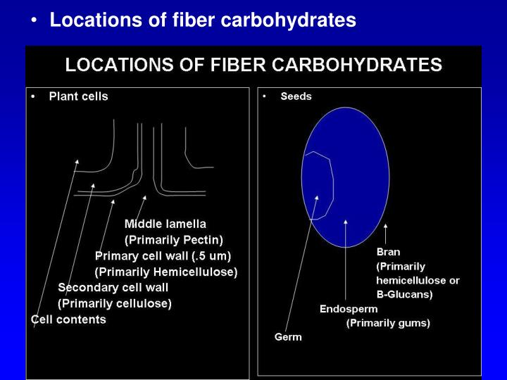 Locations of fiber carbohydrates