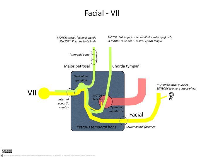 Facial - VII
