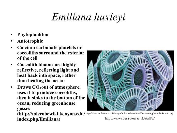 Emiliana huxleyi