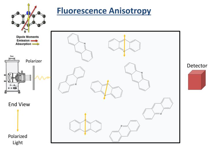 Fluorescence Anisotropy