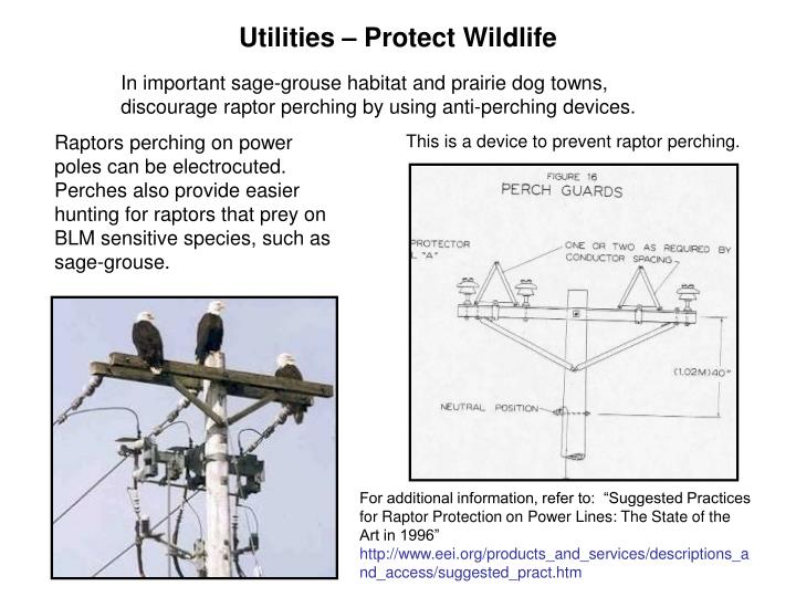 Utilities – Protect Wildlife