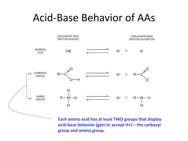 Acid-Base Behavior of AAs